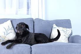 best sofa fabric for dogs best of dog friendly couches or surprising dog friendly couches best