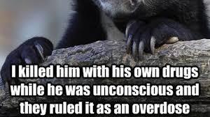 Confession Bear Meme - alleged murder confession through reddit meme youtube