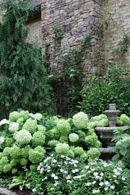 reader photos more from brenda u0027s garden in georgia fine gardening