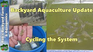 backyard aquaculture update cycling the system 3rd june 2014