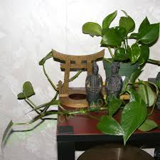 garden golden pothos plant journal golden pothos houseplant