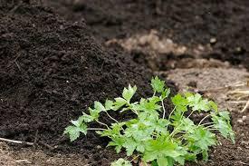 Vegetable Garden Preparation by Vegetable Growing Basics Help U0026 Advice In Soil Preparation Rhs