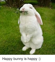Angry Bunny Meme - 25 best memes about happy bunny happy bunny memes