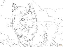 swift fox portrait coloring page free printable coloring pages