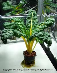 hydroponic workshop september 2011