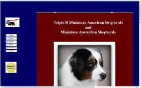 triple r australian shepherds miniature australian shepherd breeders directory o puppy