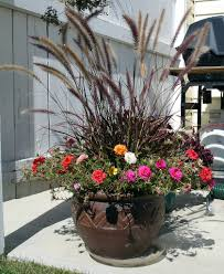 8 water wise ornamental grasses ideas tips install it direct