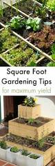 Squar Foot Best 25 Square Foot Gardening Ideas On Pinterest Square Foot