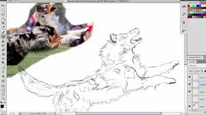 australian shepherd illustration speed painting dog breeds australian shepherd youtube