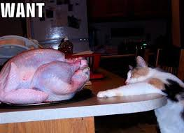 9 things cat owners experience on thanksgiving meowingtons