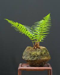 google image result for http www artofbonsai org art of bonsai