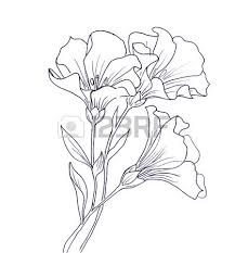 outline drawing images u0026 stock pictures royalty free outline