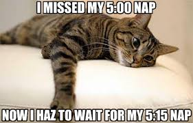 Cat Problems Meme - image 376342 first world problems cat know your meme