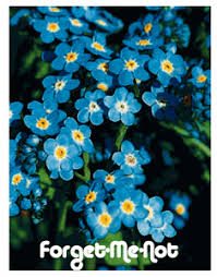forget me not seed packets me not seed packet