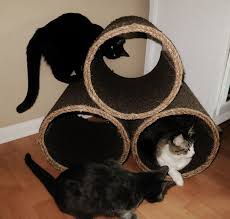 Free Diy Cat Furniture Plans by Shed Plans Free Nz Diy Cat Furniture Plans Wooden Plans