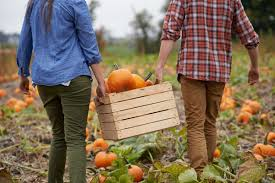 Halloween Pumpkin Origin Genius Pumpkin Carving Tips Reader U0027s Digest