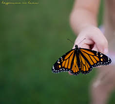 Meaningful Butterfly - learning happiness is here