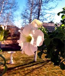 thanksgiving day flowers soul amp aquarium drunkard inspiration graceland elvis the