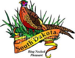 state bird of south dakota bird of south dakota the ring necked pheasant royalty free