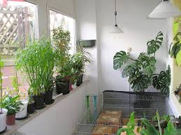 Winter Indoor Garden - this is what you need for successful indoor gardening hobby farms