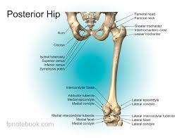 Knee Bony Anatomy Knee Anatomy