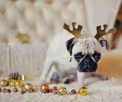 christmas party pug with deer antlers on a background of