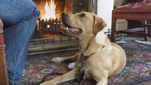 Dog Friendly Cottages Lake District by The Lake District National Trust