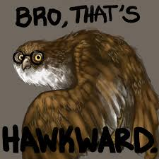 Hawkward Meme - uhm that s hawkward by izzki on deviantart