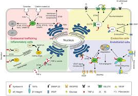 regulation of intracellular membrane trafficking and cell dynamics