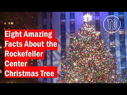 Rockefeller Tree Rockefeller Center Tree Guide Plus What To Do Nearby