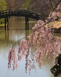 18 beautiful botanical garden wedding venues martha stewart weddings