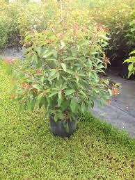 florida native plants smarty plants nursery