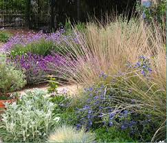 learn all about water wise landscaping