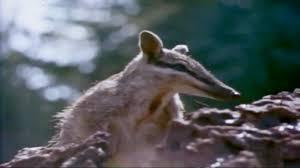 australia u0027s animal mysteries national geographic youtube