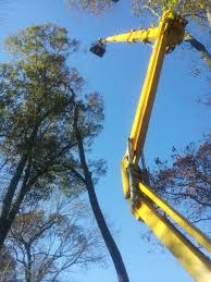 raleigh commercial and residential tree removal services