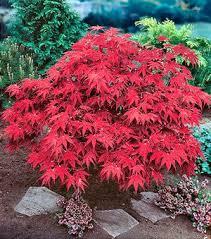 All Year Flowering Shrubs - 119 best garden plants images on pinterest garden plants plants