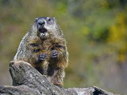 groundhog started