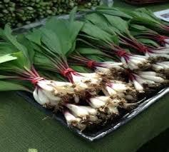 wild ramps wild leeks bulbs roots plants for sale