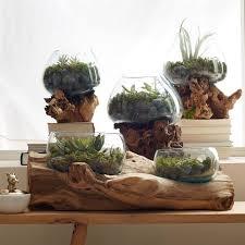 Wood Vases For Sale Wood Glass Terrariums West Elm
