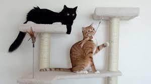 Cat Trees For Big Cats 2 Cats 1 Cat Tree Youtube