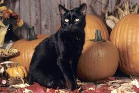 halloween black cat pumpkin wallpaper