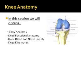Interactive Knee Anatomy Knee Ligaments