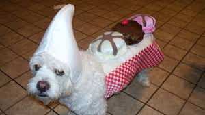 Halloween Costumes Dogs Cutest Puppy Costumes 2011 Pet Halloween Costumes Southern Living