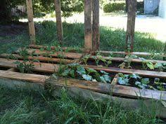 pallet turnips vegetable garden turnip vegetable pallets garden