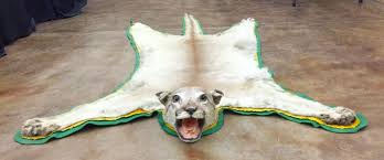 mountain lion rug with head mount