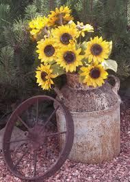 old milk can stuffed with sunflowers u0026 a rusty wagon wheel in