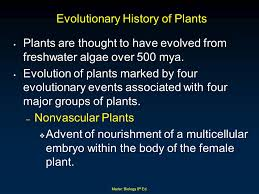 evolution and diversity of plants ppt download