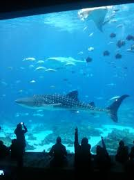 japanese aquarium whale sharks and the ethics of aquariums the science slug
