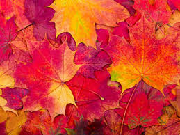 Fall Autumn | is it autumn or fall merriam webster