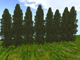 second marketplace hinoki false cypress 20m tree screen